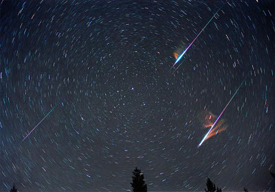 The Fireballs of the Leonids