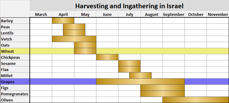 Havesting and Ingathering Seasons in Israel